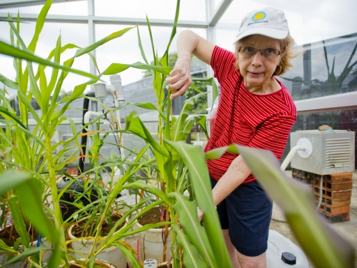 Researcher holds plants