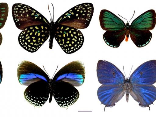 eight specimen butterflies