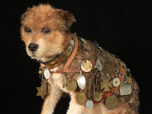 Owney the dog