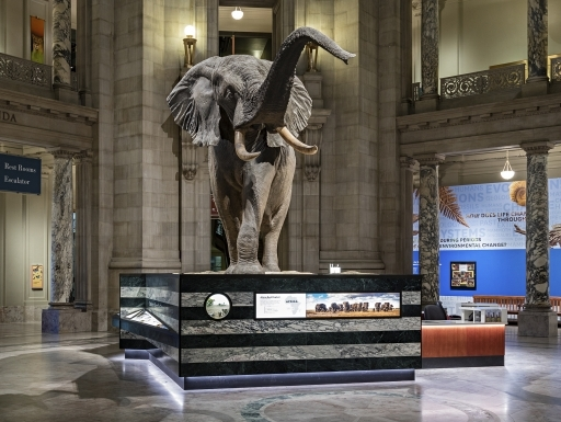 Museo Smithsonian.Visiting The Smithsonian Smithsonian Institution