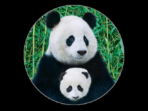 Panda puzzle.