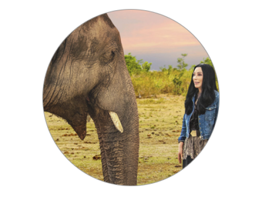 Elephant with Cher