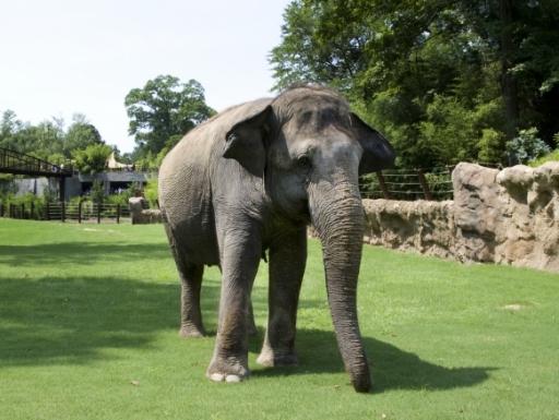 elephant at zoo.