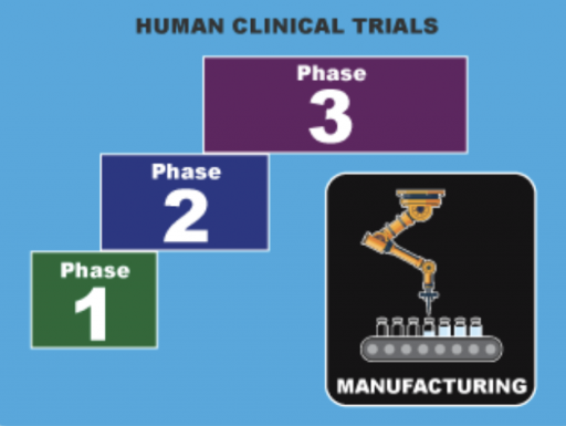 image showing phases of vaccine trials