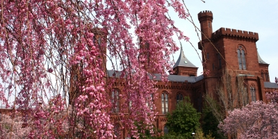 Weeping cherry tree and Castle
