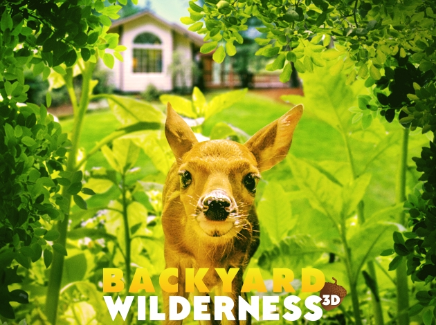 Backyard Wilderness Slideshow