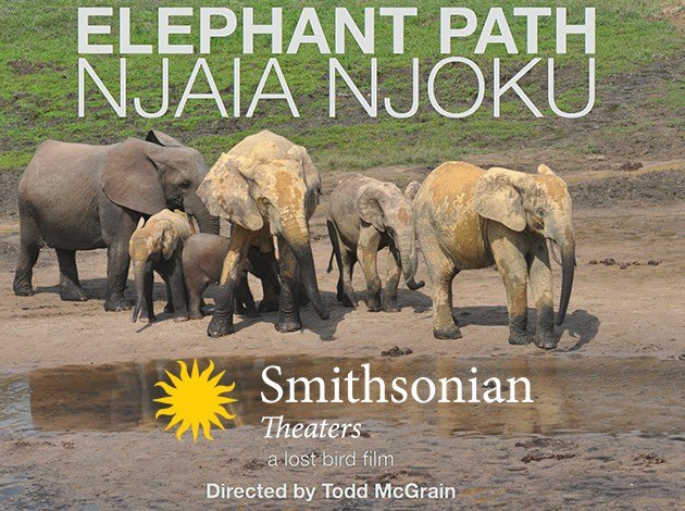 Elephant Path Poster