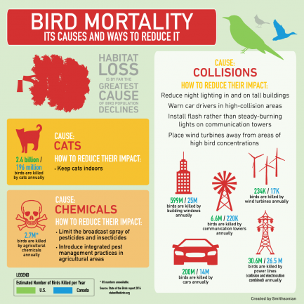 Bird Mortality Infograhic