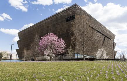 Museum exterior with blooming tree
