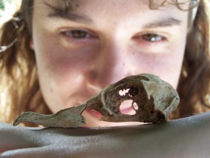 Anne Wiley observing Petrel Skull
