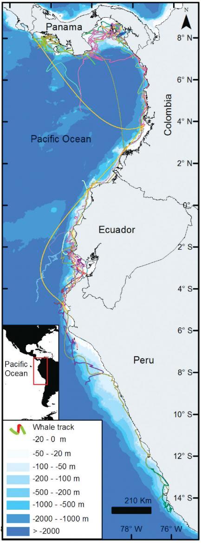 Illustration of coastal map