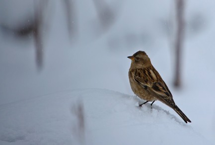 Bird perched on small twig surrounded by snow