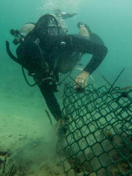 diver with net