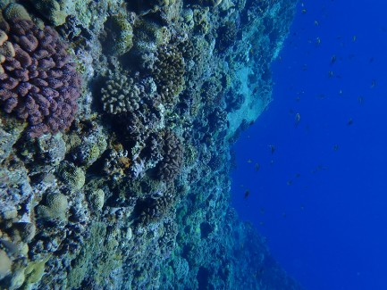 Partiallyliving coral reef