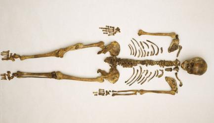 Calvert skeleton