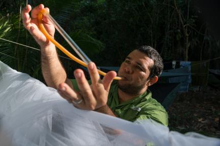 Researcher collecting mosquitoes