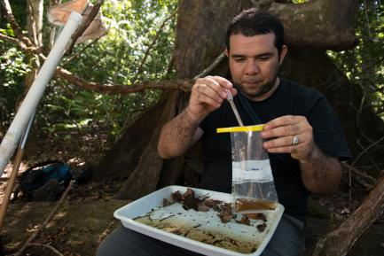 researcher collecting larvae