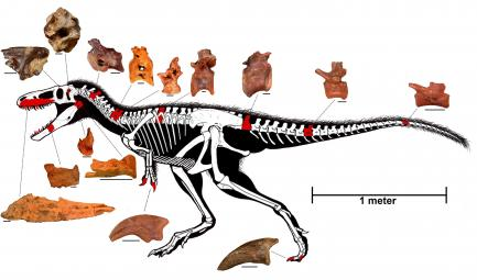 Dinosaur Discovery Timurlengia Euotica Smithsonian Institution