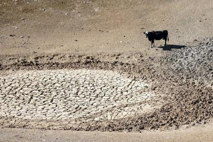 A cow lingers at a dry waterhole