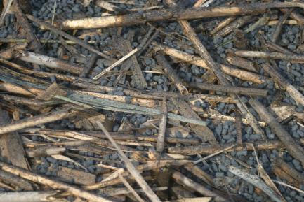 carbon pellets on marsh