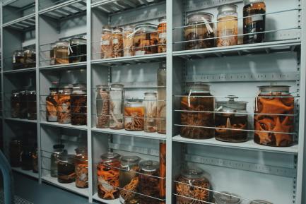 collection jars on shelf