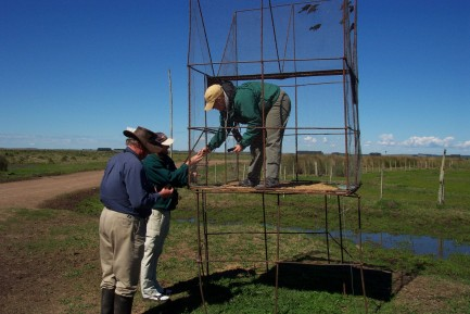Researchers setting up mist nets