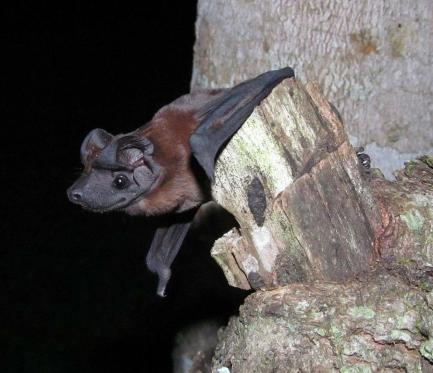Close up of bat