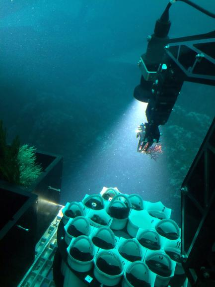 Submersible collecting sample