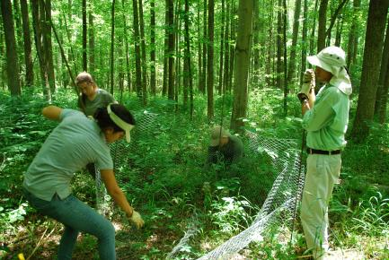 Setting up deer exclusion cage