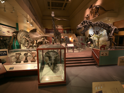 Dinosaur and Fossil hall