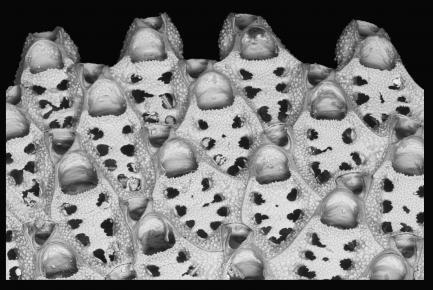 Close up of individual zooids