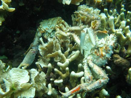 close up of dead corals