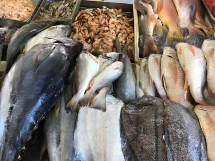 fish in fish market