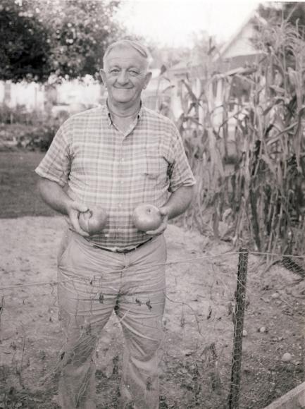 Gardener with tomatoes