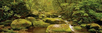 Panoramic view of stream, mossy rocks