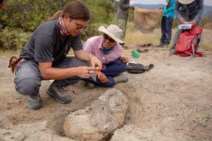 Researchers Excavating Fossils in Colombian Andes