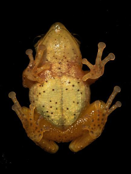 frog seen from below