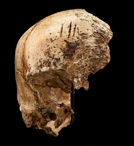 Jamestown - Skull with Chops