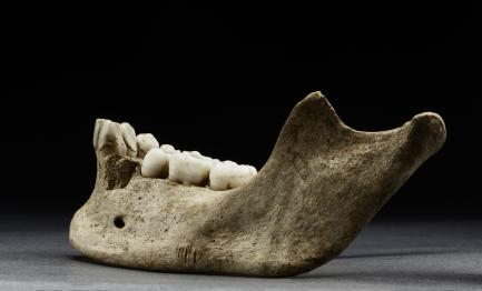 Jamestown - Mandible with Cuts