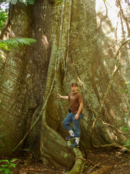 Man stands at base of big tree