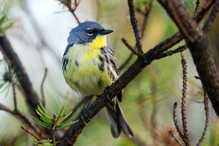 Close up of small blue and yellow bird