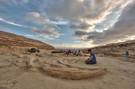 Fossil whales at Cerro Ballena