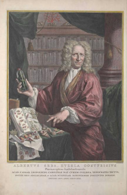 Dutch pharmacist Albertus Seba