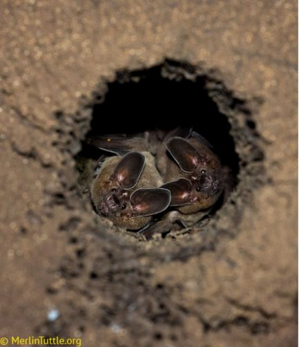 two bats in a cave
