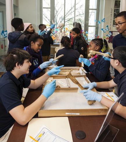 Students Examining Bones