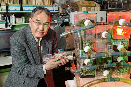 Curator with Ant Farm