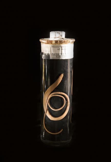 Specimen vial containing parasite
