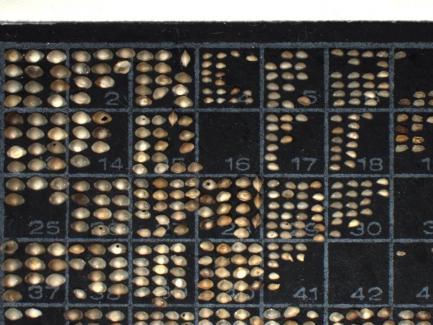 slide showing ostrocods