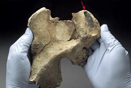 hipbone
