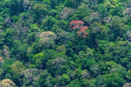 Birdseye view of lush treetops
